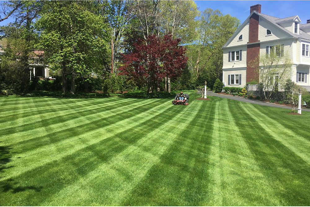 Lawn Care and Our COVID-19 Update