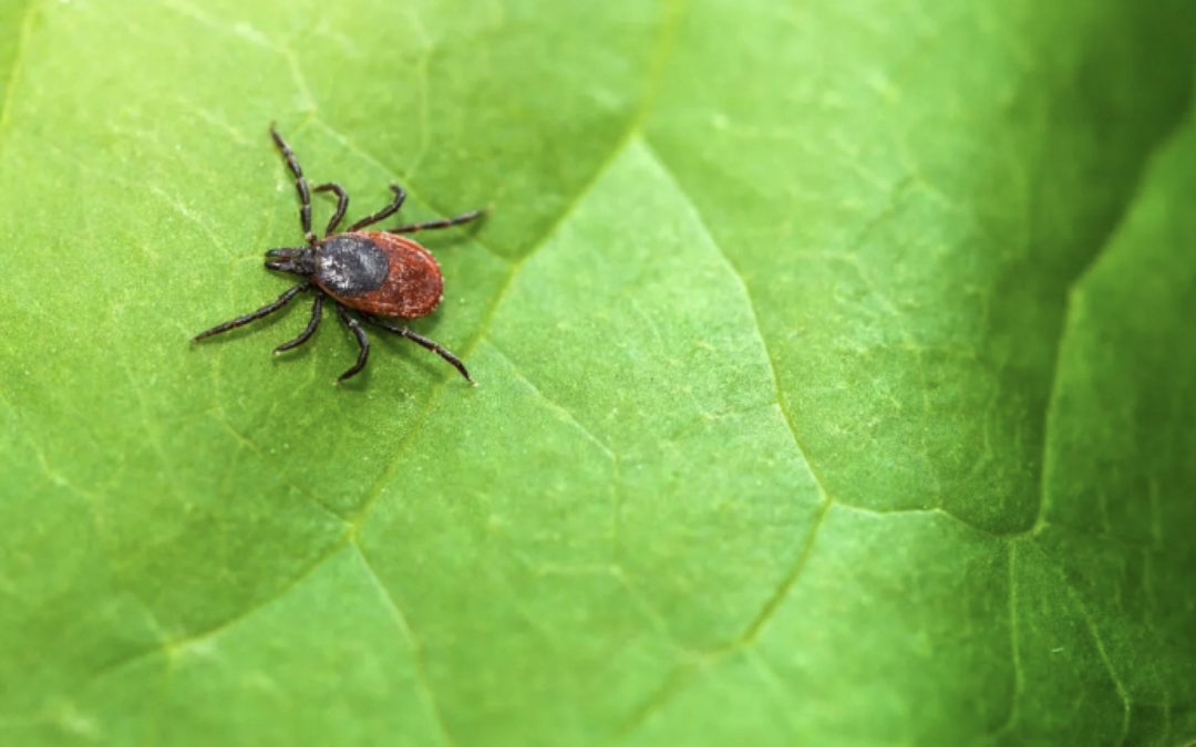 Why Invest in Tick and Insect Control
